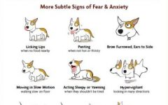 Six signs of aggression