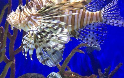 Diving into the aquarium