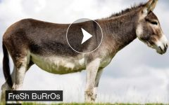 Fresh beats from Fresh Burros