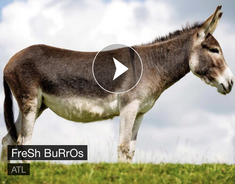 Fresh+beats+from+Fresh+Burros